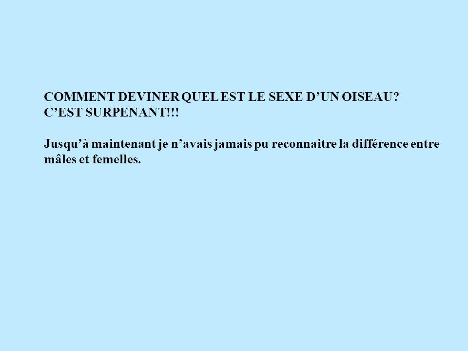 COMMENT DEVINER QUEL EST LE SEXE DUN OISEAU.CEST SURPENANT!!.