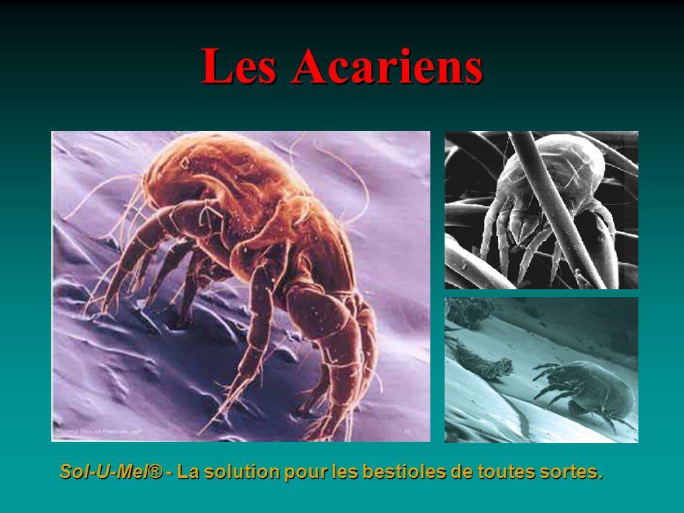Les Acariens Sol-U-Mel® - La solution pour les bestioles de toutes sortes.