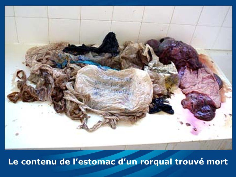 Le contenu de lestomac dun rorqual trouvé mort