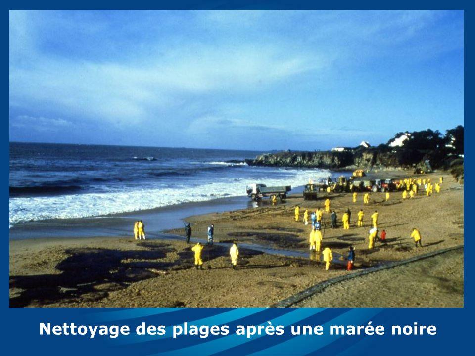 Nettoyage des plages après une marée noire