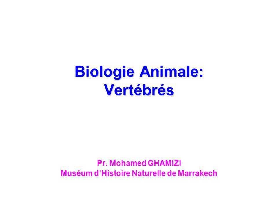 Biologie Animale: Vertébrés Pr. Mohamed GHAMIZI Muséum dHistoire Naturelle de Marrakech