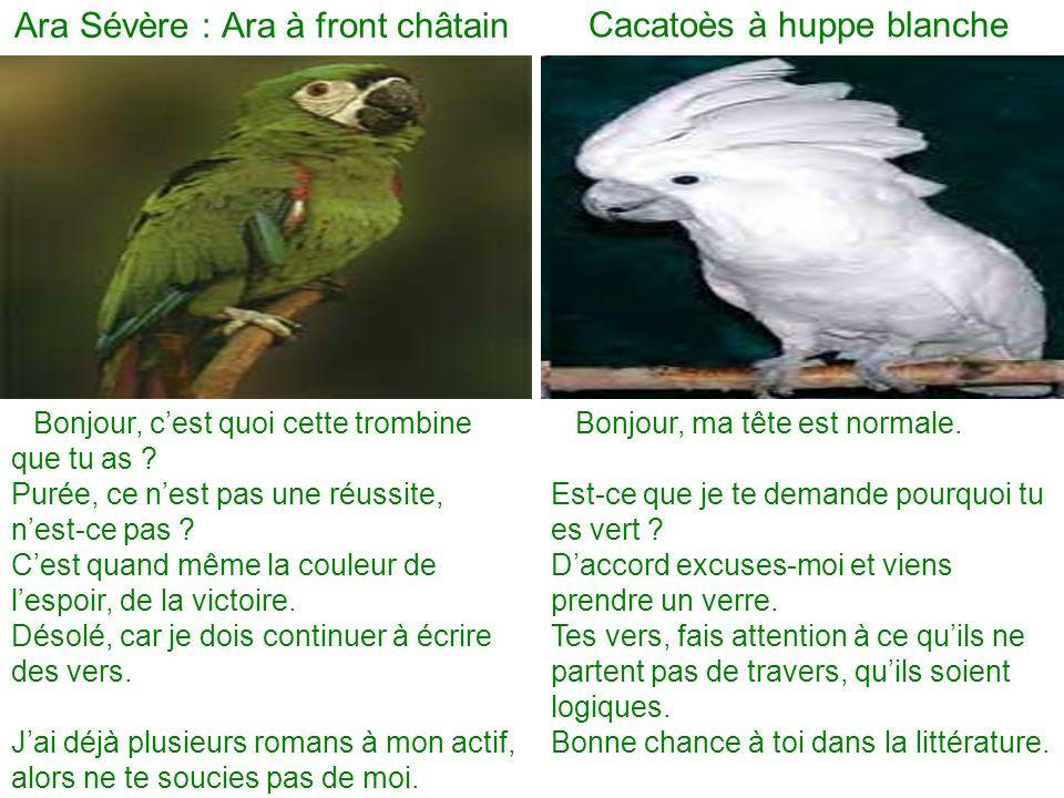 Ara Sévère : Ara à front châtain Cacatoès à huppe blanche Bonjour, cest quoi cette trombine que tu as .