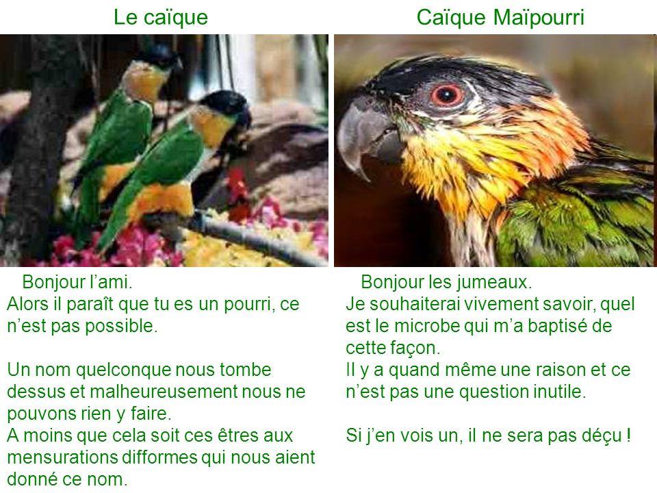Le caïque Caïque Maïpourri Bonjour lami.Alors il paraît que tu es un pourri, ce nest pas possible.