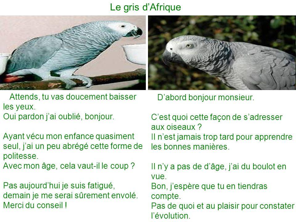 Le gris dAfrique Dabord bonjour monsieur. Cest quoi cette façon de sadresser aux oiseaux ? Il nest jamais trop tard pour apprendre les bonnes manières