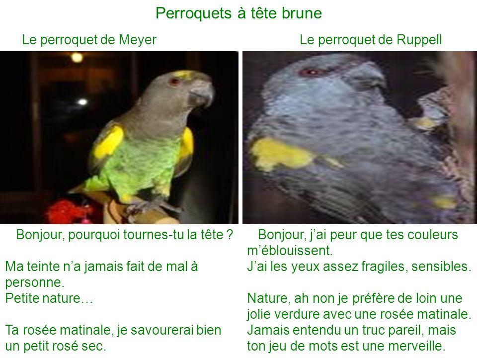 Perroquets à tête brune Le perroquet de Meyer Le perroquet de Ruppell Bonjour, jai peur que tes couleurs méblouissent. Jai les yeux assez fragiles, se