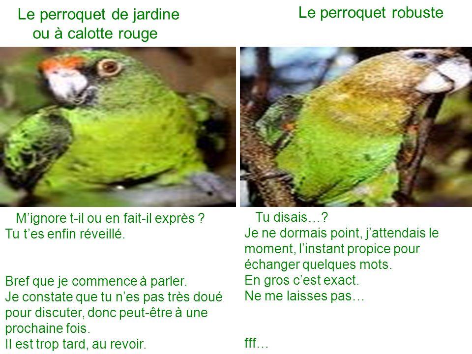 Le perroquet de jardine Le perroquet robuste Mignore t-il ou en fait-il exprès ? Tu tes enfin réveillé. Bref que je commence à parler. Je constate que