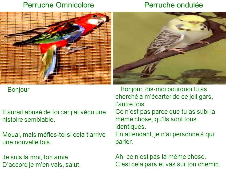 Perruche Omnicolore Perruche ondulée Bonjour Il aurait abusé de toi car jai vécu une histoire semblable.