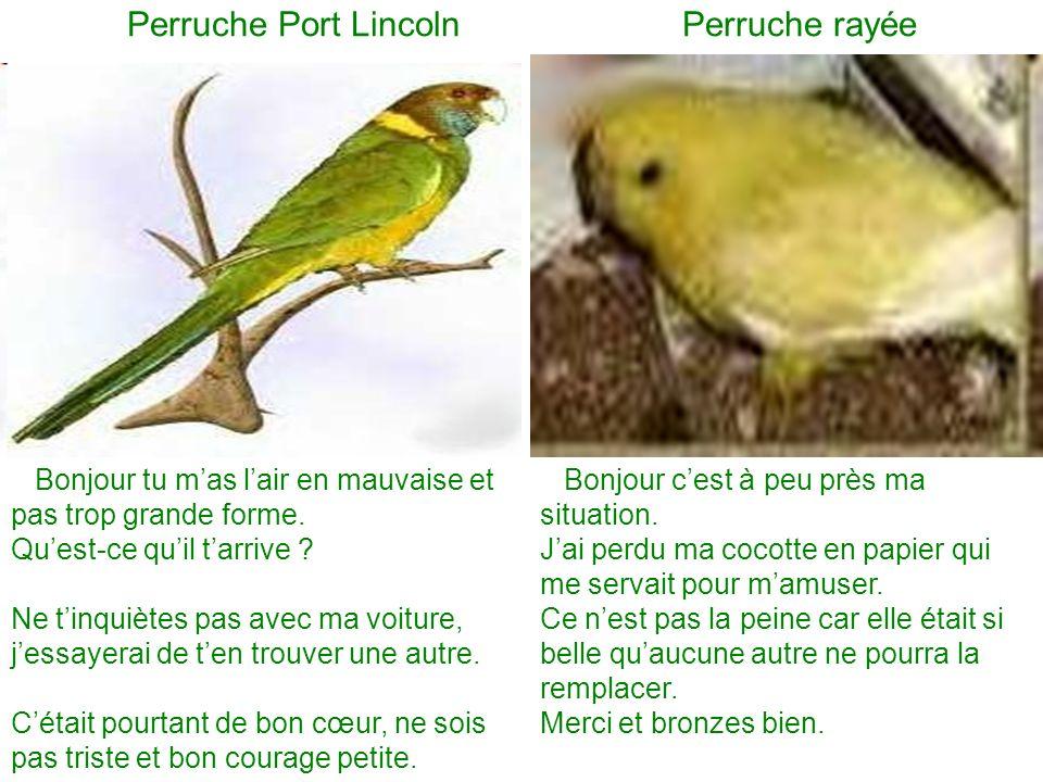 Perruche Port Lincoln Perruche rayée Bonjour tu mas lair en mauvaise et pas trop grande forme. Quest-ce quil tarrive ? Ne tinquiètes pas avec ma voitu