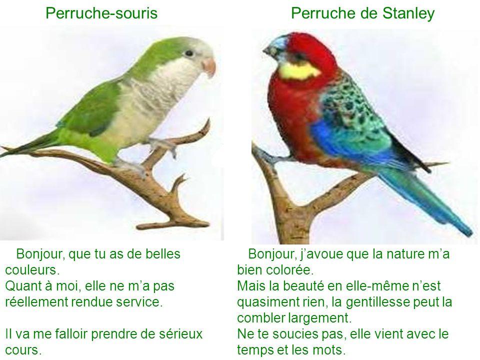 Perruche-souris Perruche de Stanley Bonjour, que tu as de belles couleurs. Quant à moi, elle ne ma pas réellement rendue service. Il va me falloir pre