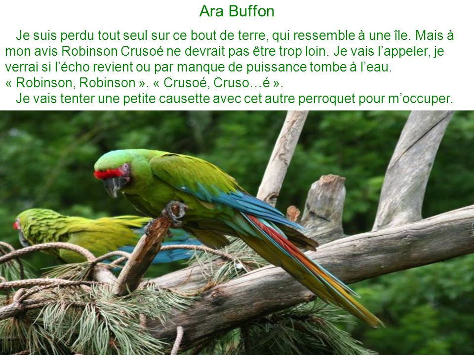 Ara Buffon Je suis perdu tout seul sur ce bout de terre, qui ressemble à une île.