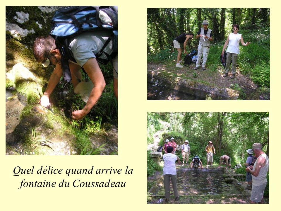 Quel délice quand arrive la fontaine du Coussadeau