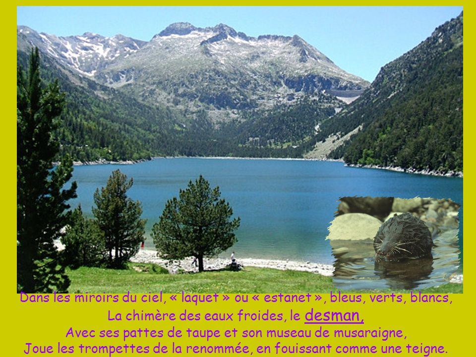 Au plus haut des monts, au plus profond des vallées En hiver féerique où scintille la neige accumulée Vue sur les Pyrénées ariégeoises au-dessus de St