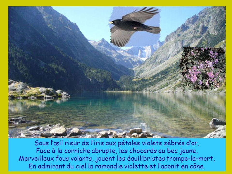 Dans les miroirs du ciel, « laquet » ou « estanet », bleus, verts, blancs, La chimère des eaux froides, le desman, Avec ses pattes de taupe et son mus