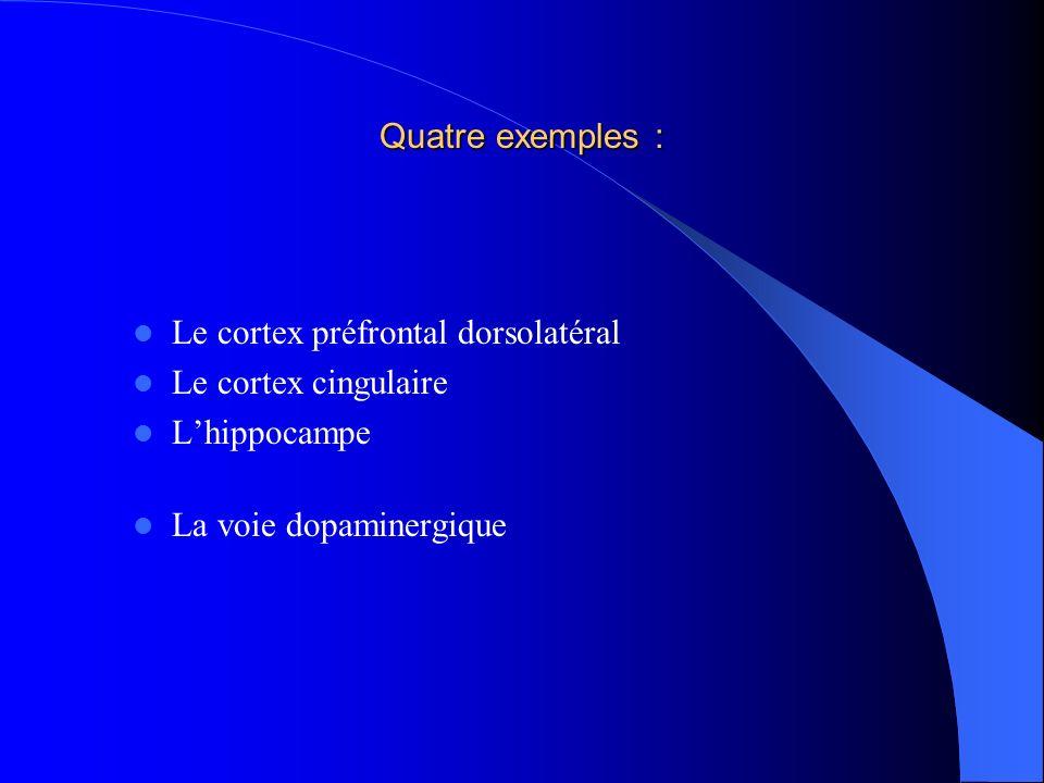 Quatre exemples : Le cortex préfrontal dorsolatéral Le cortex cingulaire Lhippocampe La voie dopaminergique