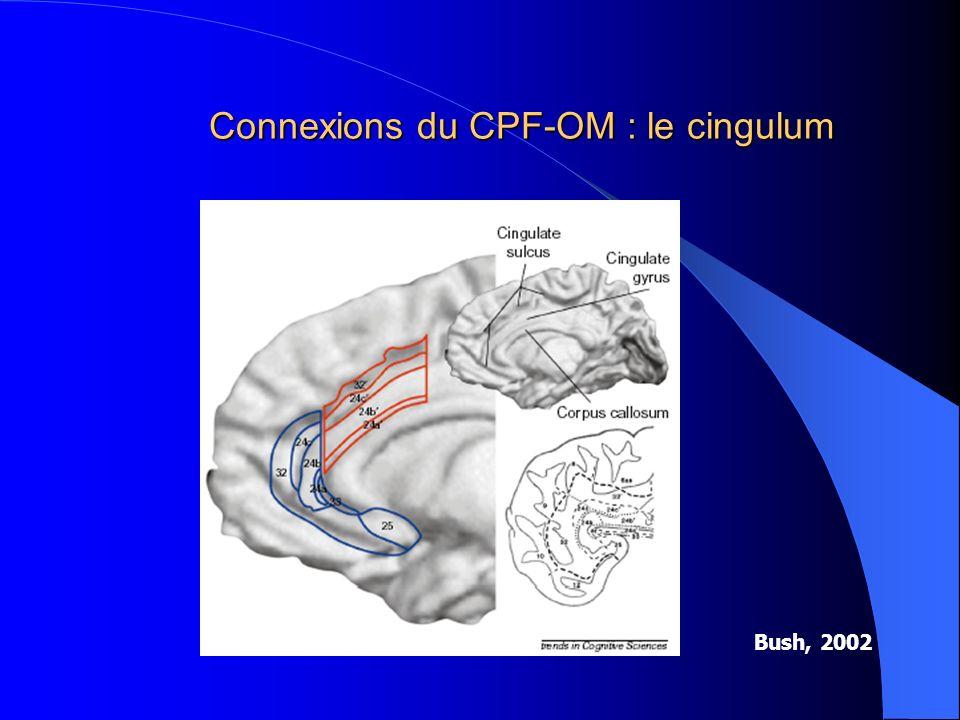 Connexions du CPF-OM : le cingulum Bush, 2002