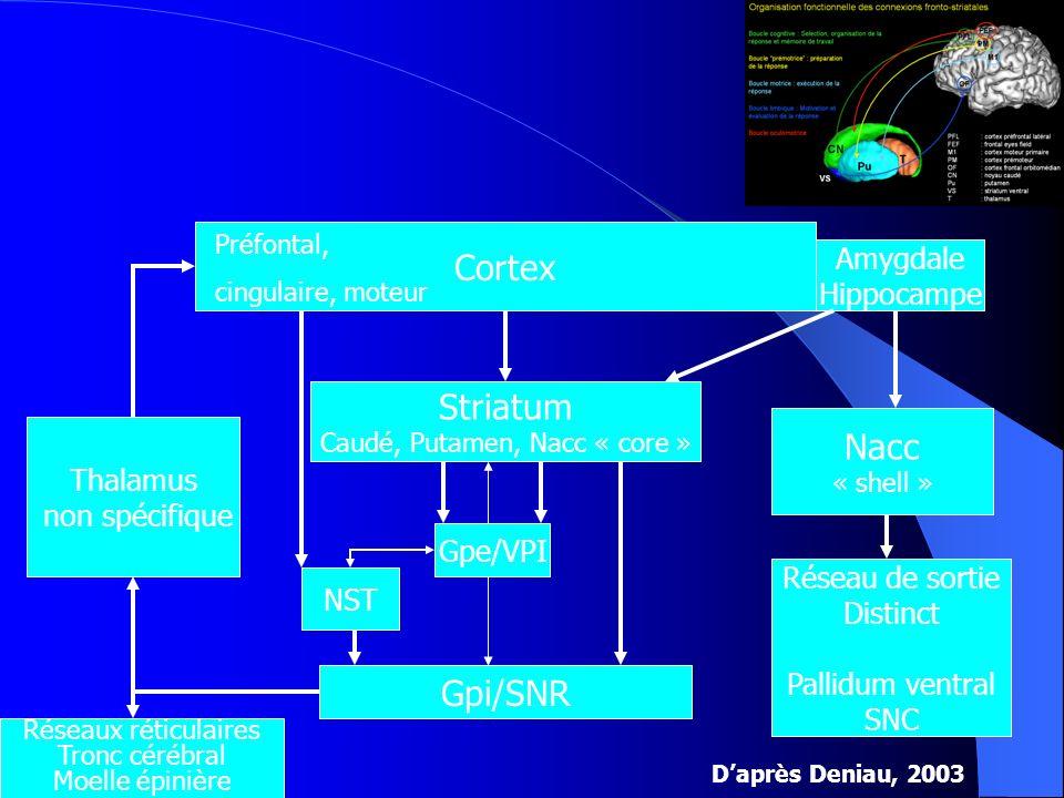 Cortex Préfontal, cingulaire, moteur Striatum Caudé, Putamen, Nacc « core » Nacc « shell » Amygdale Hippocampe Gpi/SNR Gpe/VPI NST Réseau de sortie Di