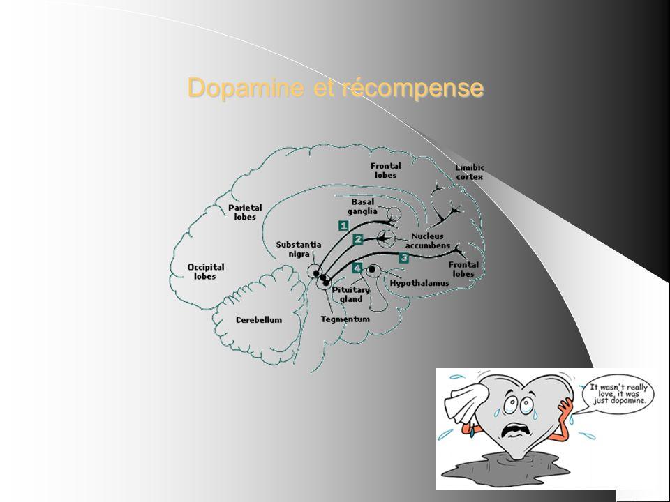 Dopamine et récompense