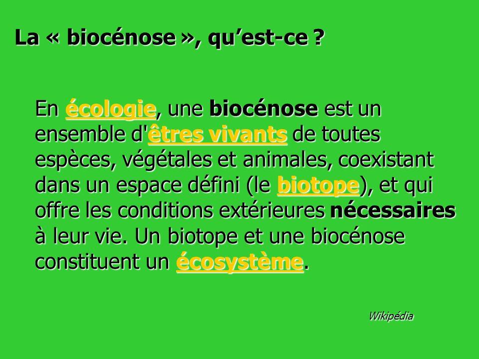 En écologie, une biocénose est un ensemble d'êtres vivants de toutes espèces, végétales et animales, coexistant dans un espace défini (le biotope), et