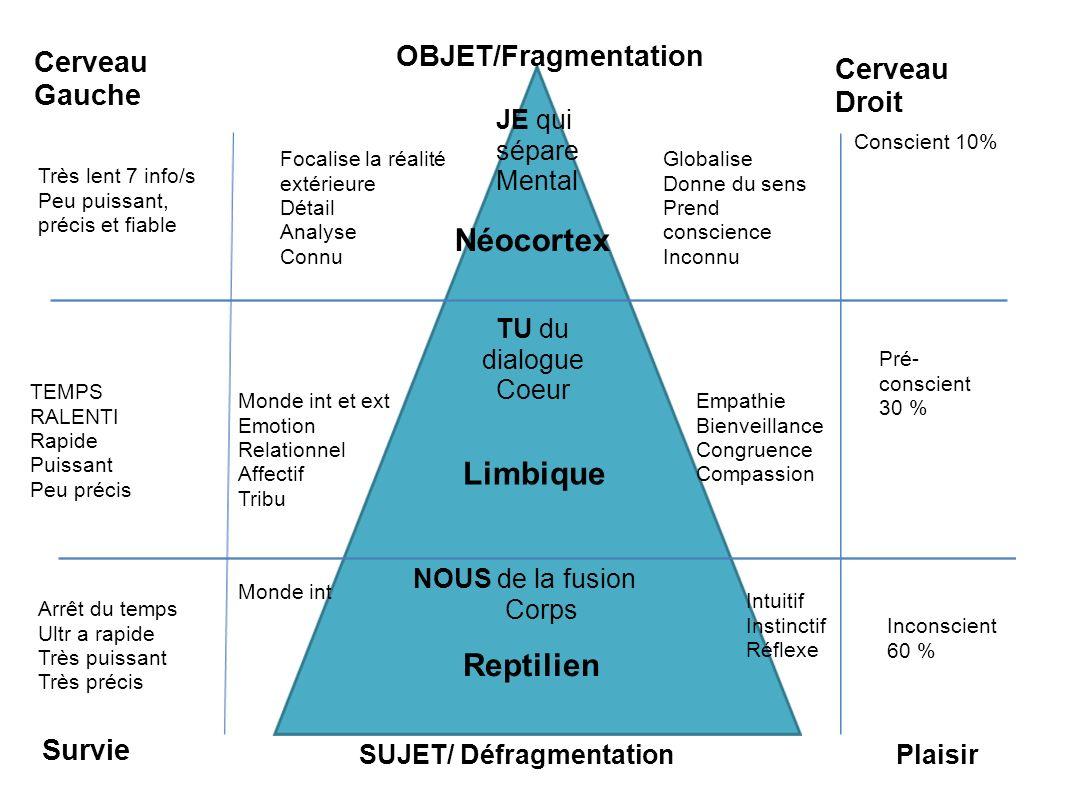 Néocortex Limbique Reptilien Cerveau Droit Cerveau Gauche OBJET/Fragmentation SUJET/ Défragmentation Conscient 10% Pré- conscient 30 % Inconscient 60