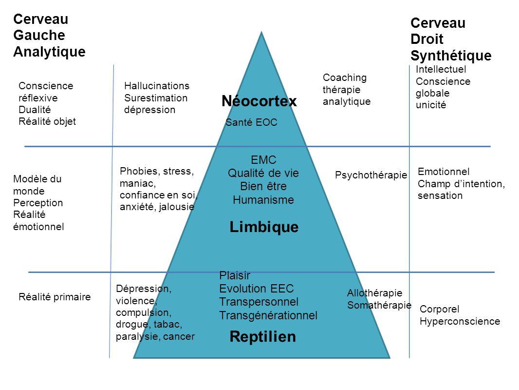 Néocortex Limbique Reptilien Cerveau Droit Synthétique Cerveau Gauche Analytique Intellectuel Conscience globale unicité Emotionnel Champ dintention,