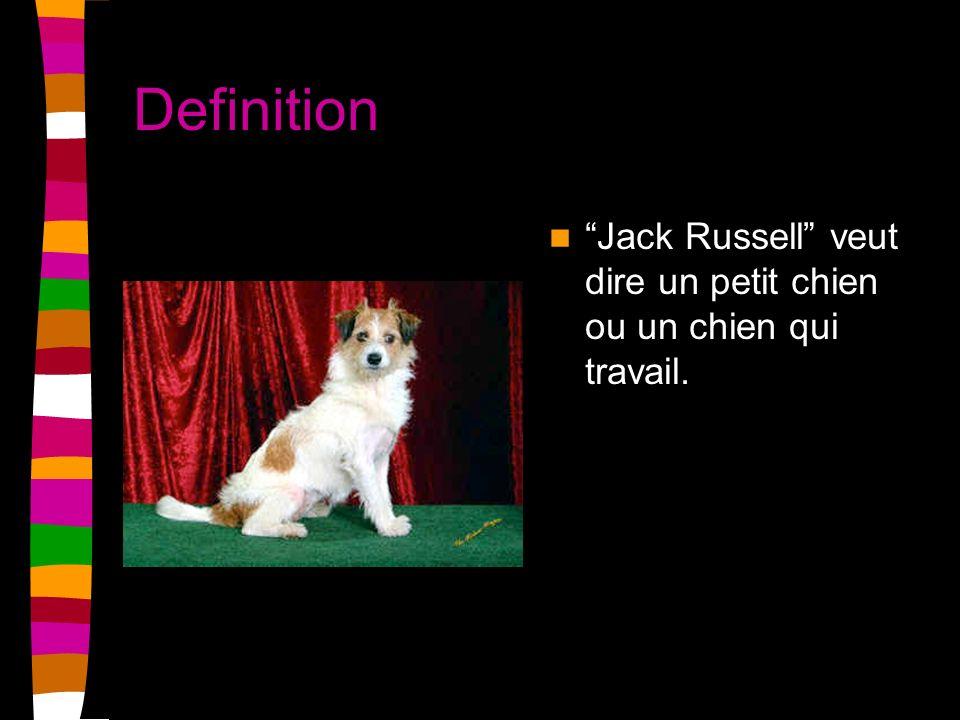 Definition Jack Russell veut dire un petit chien ou un chien qui travail.