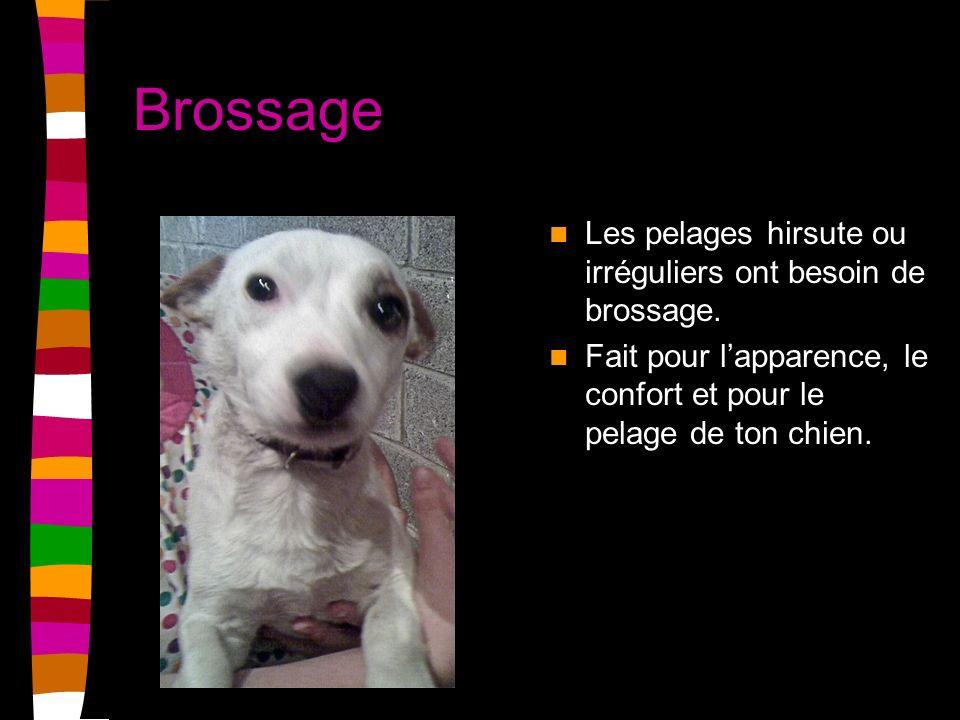 Brossage Les pelages hirsute ou irréguliers ont besoin de brossage. Fait pour lapparence, le confort et pour le pelage de ton chien.