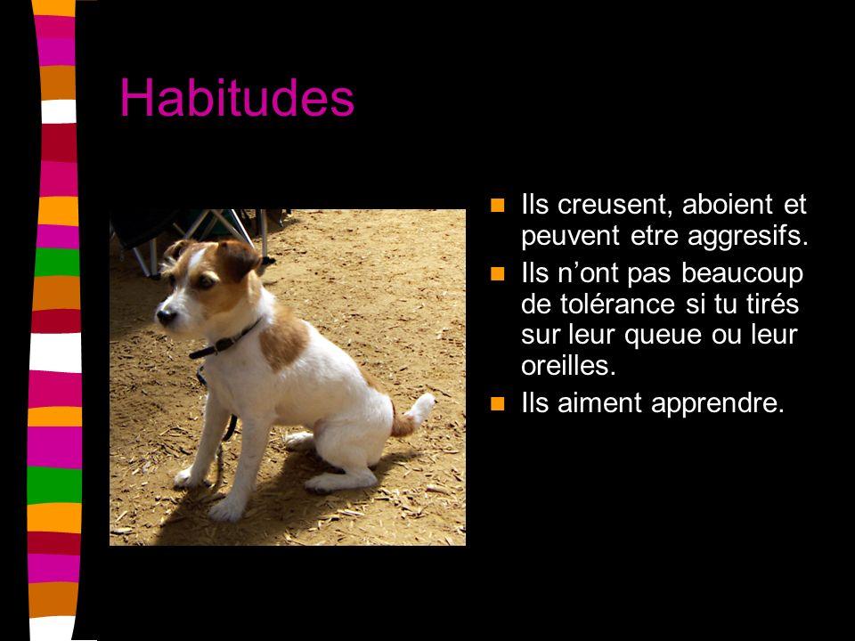 Habitudes Ils creusent, aboient et peuvent etre aggresifs. Ils nont pas beaucoup de tolérance si tu tirés sur leur queue ou leur oreilles. Ils aiment