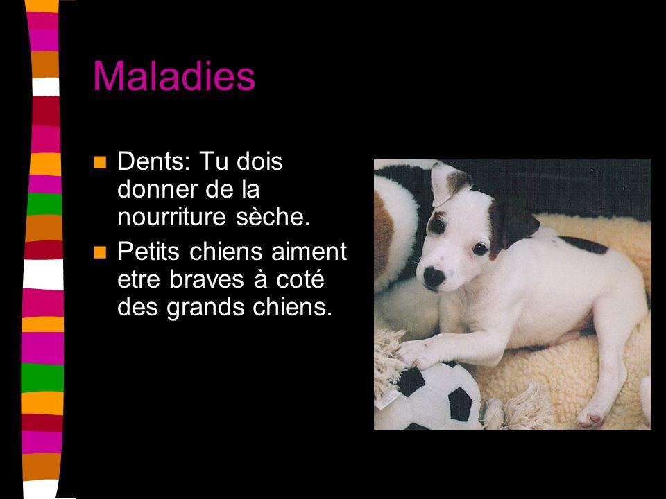 Maladies Dents: Tu dois donner de la nourriture sèche. Petits chiens aiment etre braves à coté des grands chiens.