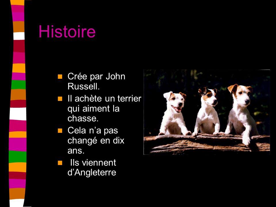 Histoire Crée par John Russell. Il achète un terrier qui aiment la chasse. Cela na pas changé en dix ans. Ils viennent dAngleterre