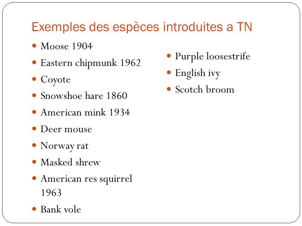 Exemples des espèces introduites a TN Moose 1904 Eastern chipmunk 1962 Coyote Snowshoe hare 1860 American mink 1934 Deer mouse Norway rat Masked shrew