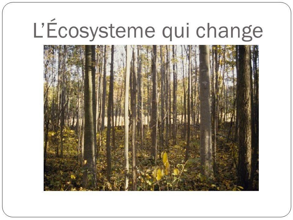 LÉcosysteme qui change