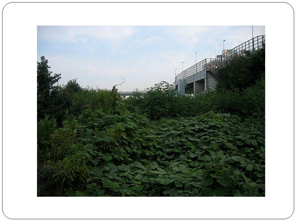 Limpact des Humains sur les écosystèmes...