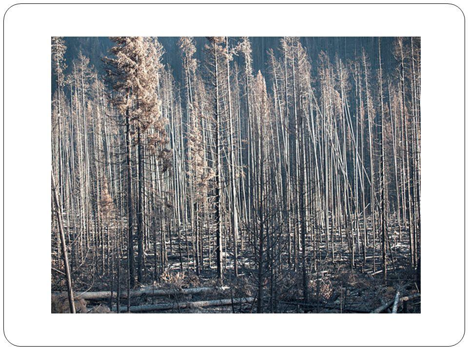 La Surexploitation des Ressources La besoin pour les ressources naturel à augmenter a cause de laugmentation de la population humaine.