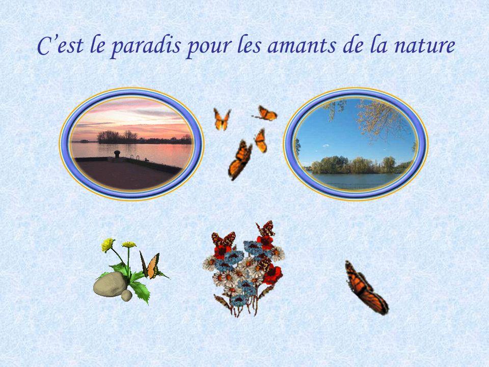Le bourg aux papillons Bed and Breakfast Pour réservation 450-787-2605 (fax - 450-787-4158) Autoroute 20 sortie 113 route 133 (chemin des Patriotes) d