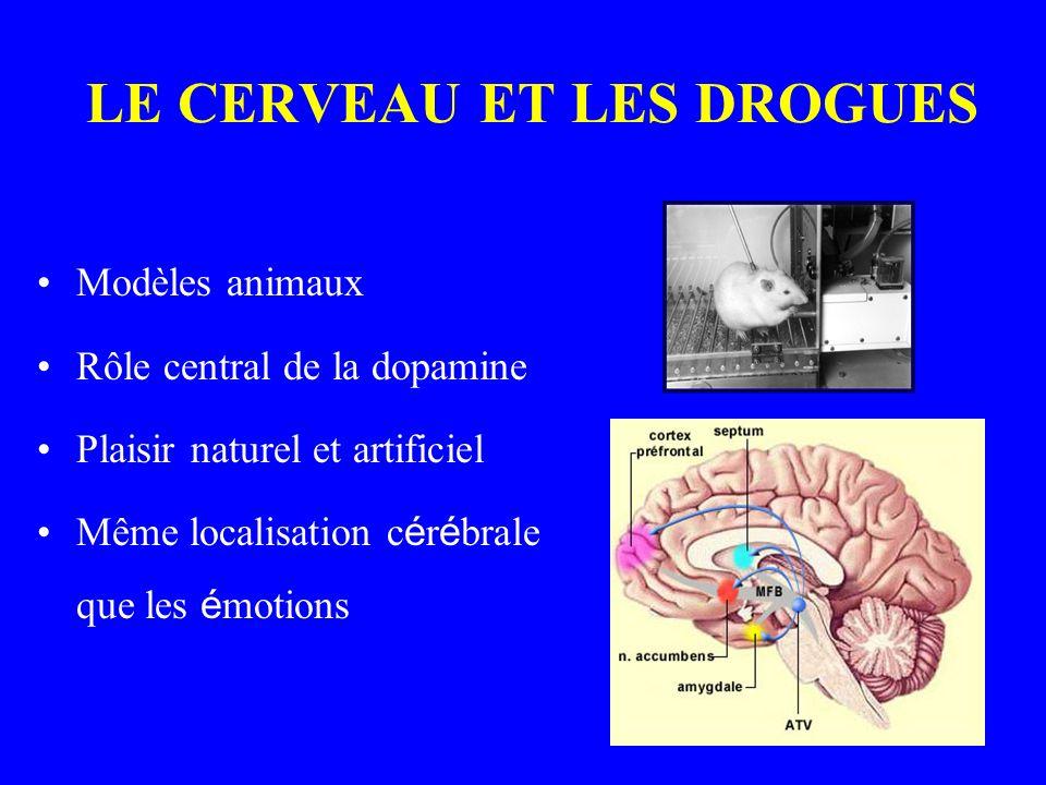 LE CERVEAU ET LES DROGUES Modèles animaux Rôle central de la dopamine Plaisir naturel et artificiel Même localisation c é r é brale que les é motions