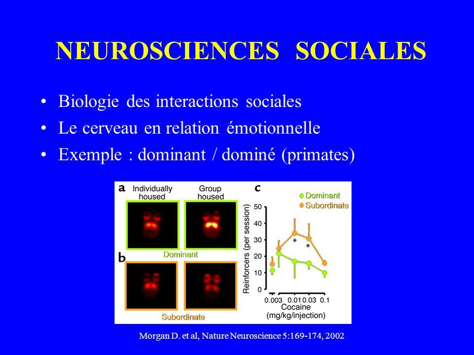 NEUROSCIENCES SOCIALES Biologie des interactions sociales Le cerveau en relation émotionnelle Exemple : dominant / dominé (primates) Morgan D.
