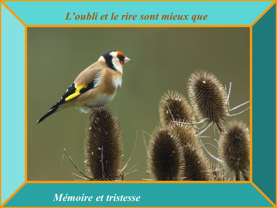 Lamour est la goutte deau qui redonne la force À une fleur flétrie de se relever.
