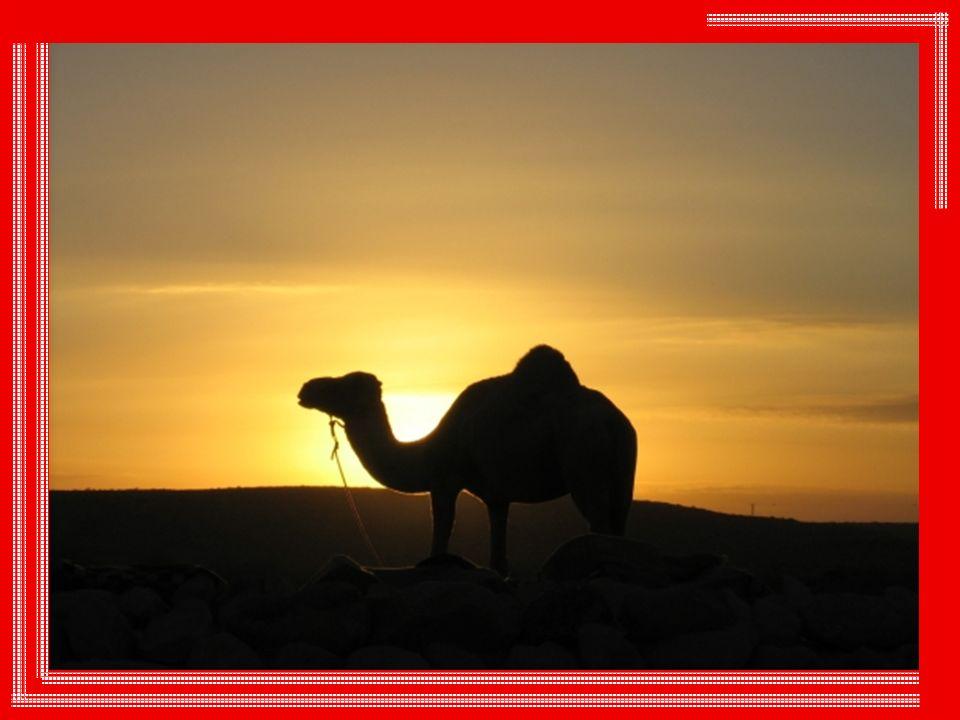 « Dieu est comme le soleil », disait un vieillard à François d Assise.