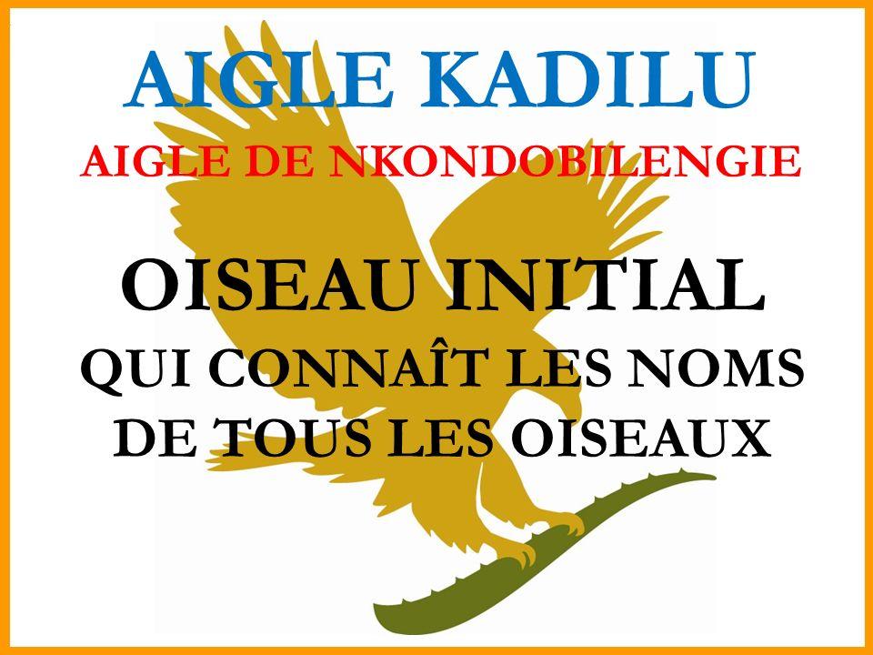 AIGLE KADILU AIGLE DE NKONDOBILENGIE OISEAU INITIAL QUI CONNAÎT LES NOMS DE TOUS LES OISEAUX