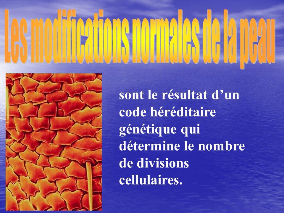 sont le résultat dun code héréditaire génétique qui détermine le nombre de divisions cellulaires.