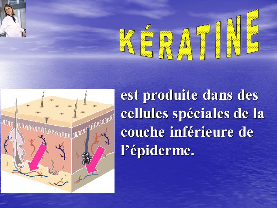 que lémulsion spéciale huile dans leau améliore les caractéristiques bénéfiques pour la peau du collagène et des fibres élastiques.