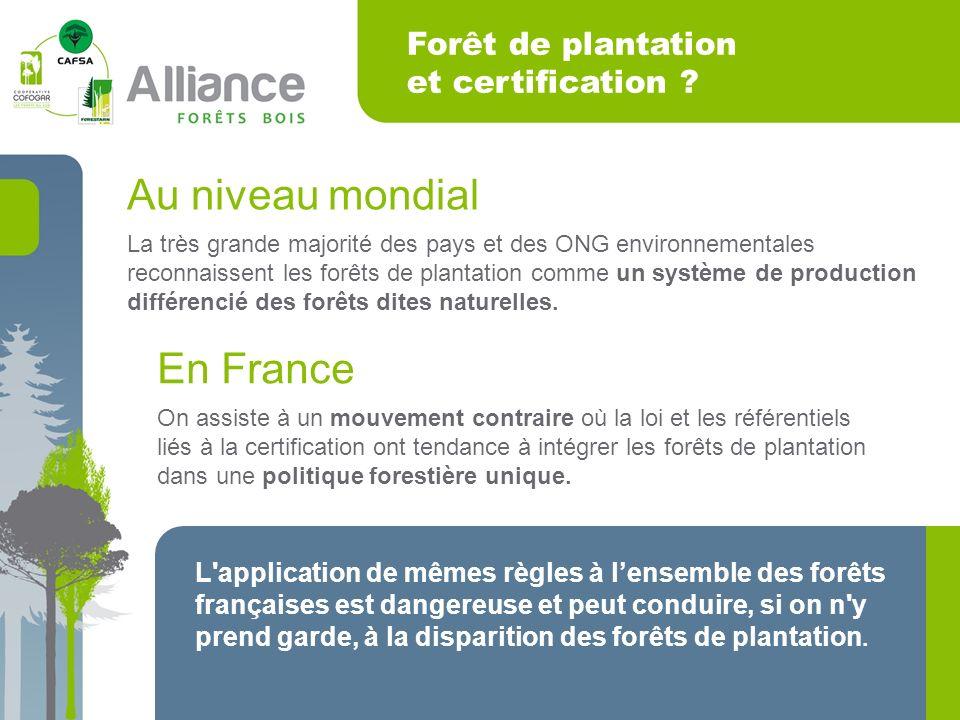 Forêt de plantation et certification .