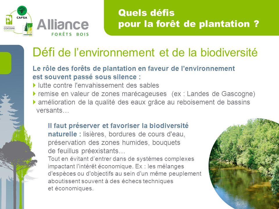 Quels défis pour la forêt de plantation .