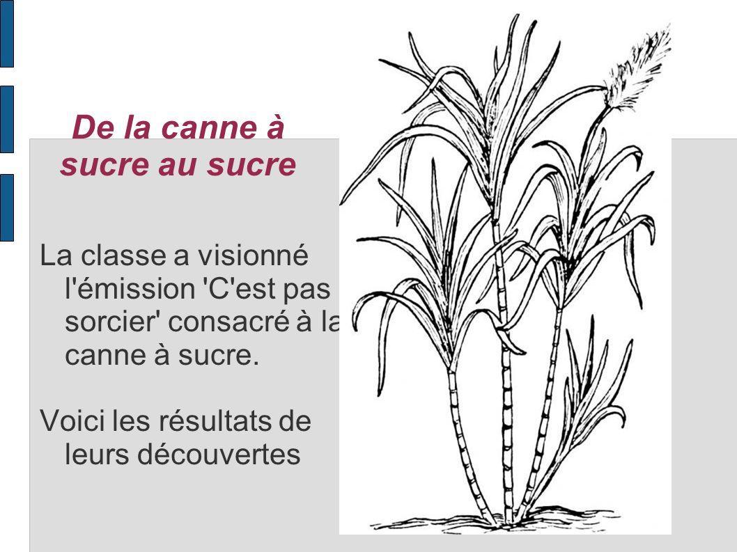 Où est cultivée la canne à sucre et pourquoi .