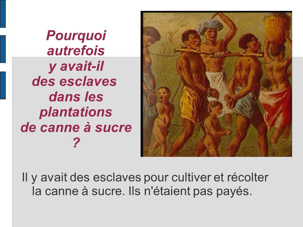 Pourquoi autrefois y avait-il des esclaves dans les plantations de canne à sucre ? Il y avait des esclaves pour cultiver et récolter la canne à sucre.