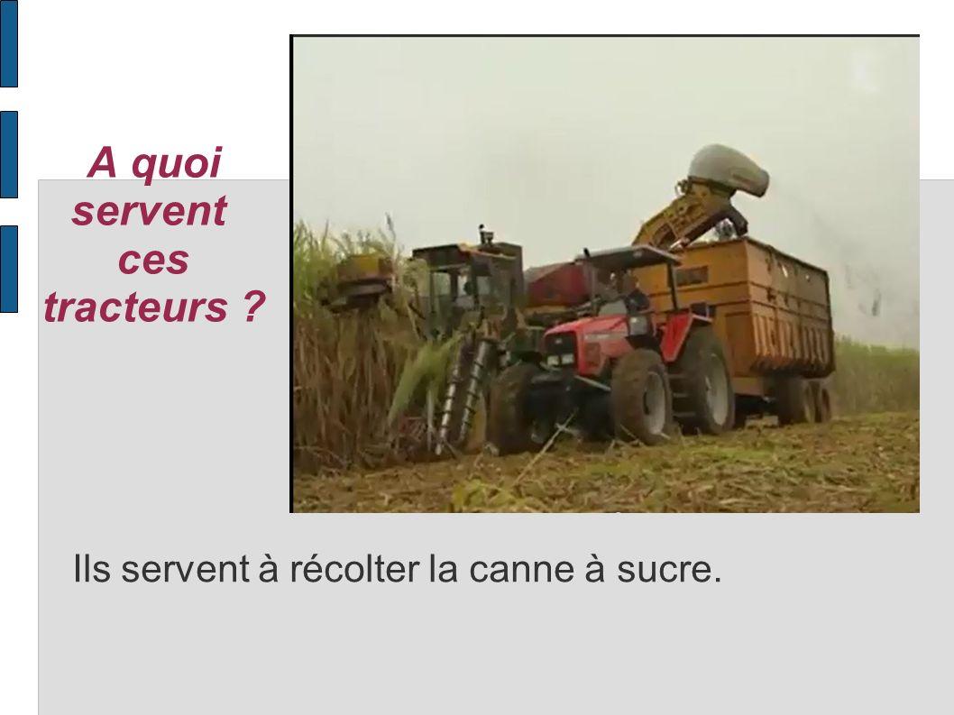 A quoi servent ces tracteurs ? Ils servent à récolter la canne à sucre.