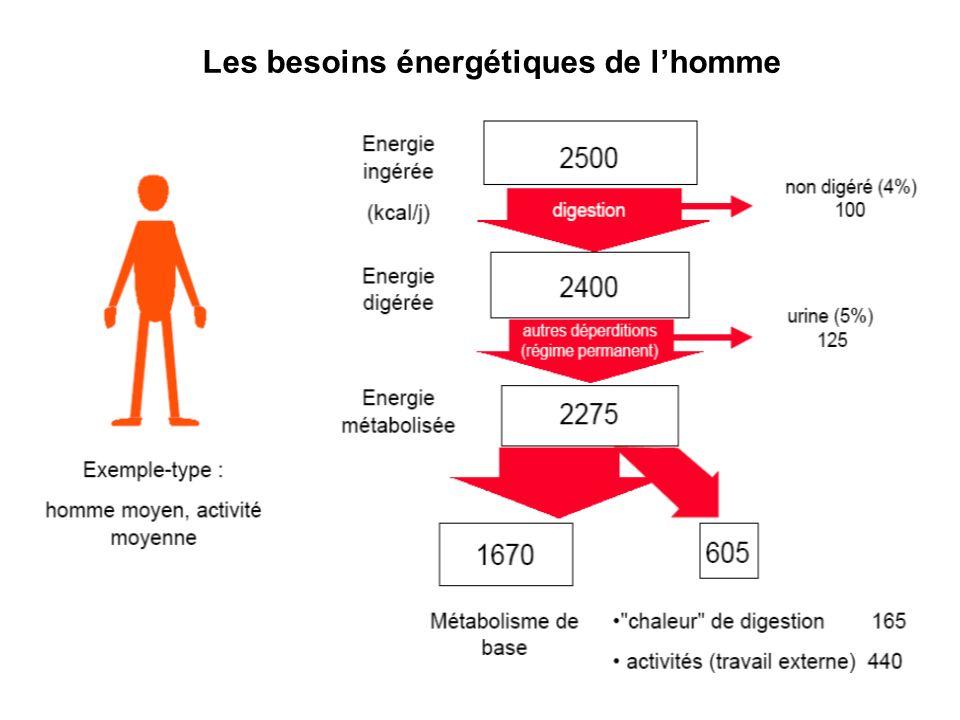 Les besoins énergétiques de lhomme