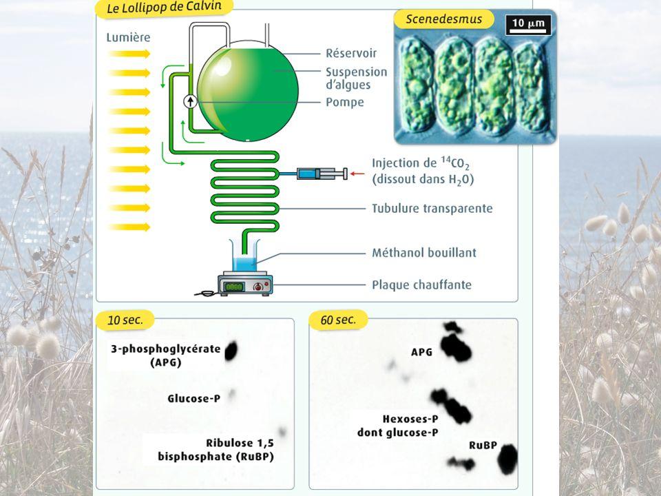 2) La phase chimique