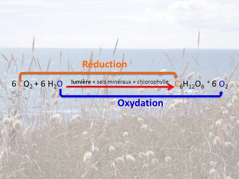 6 CO 2 + 6 H 2 O lumière + sels minéraux + chlorophylle C 6 H 12 O 6 + 6 O 2 Réduction Oxydation