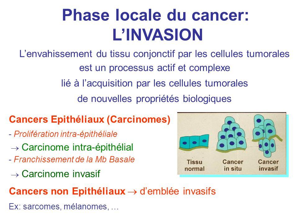 Phase locale du cancer: LINVASION Lenvahissement du tissu conjonctif par les cellules tumorales est un processus actif et complexe lié à lacquisition